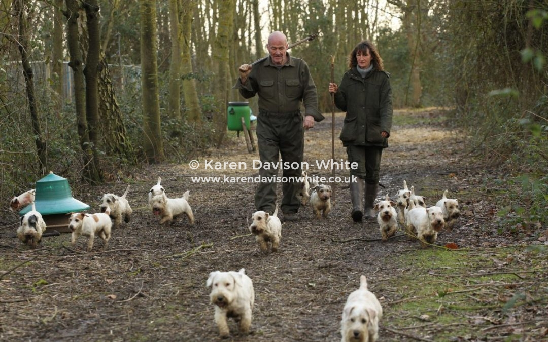 The Working Sealyham Terrier