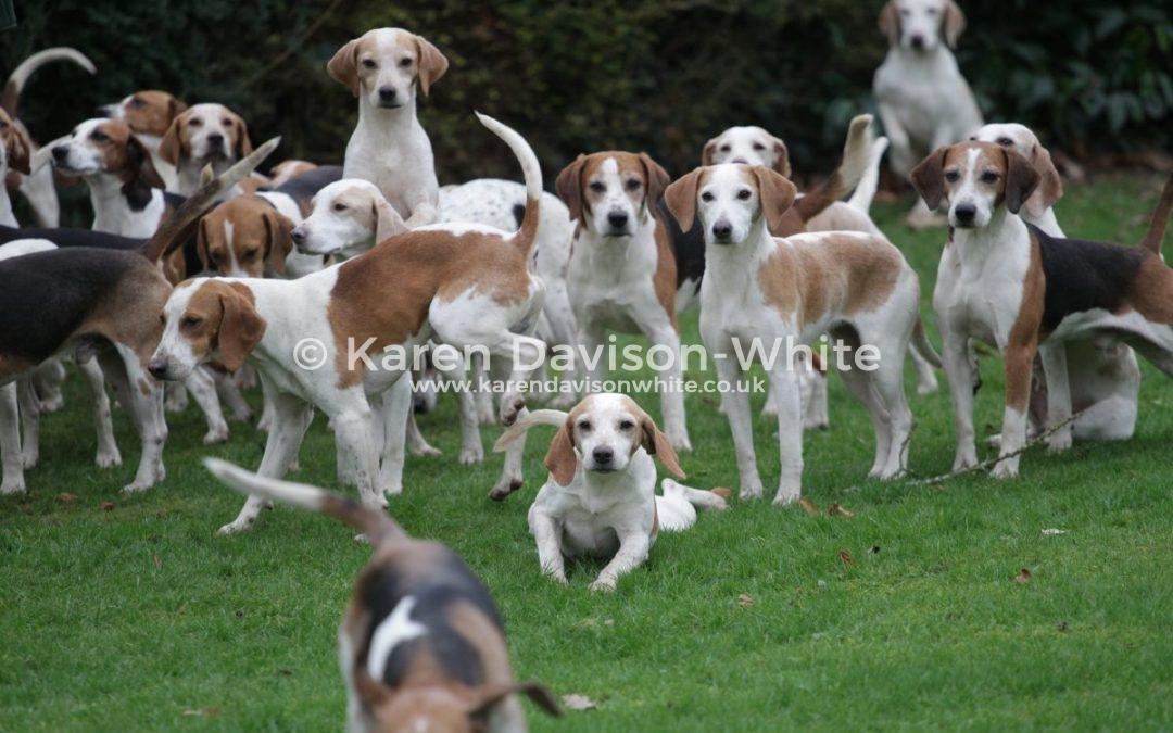 Brighton, Storrington, Surrey and North Sussex Beagles