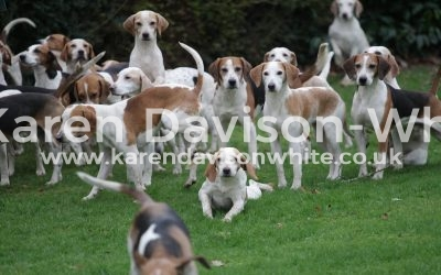 Brighton, Storrington, Surrey and North Sussex Beagles