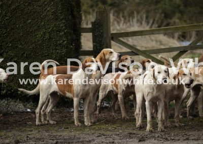 IMG_3152South Wold foxhounds