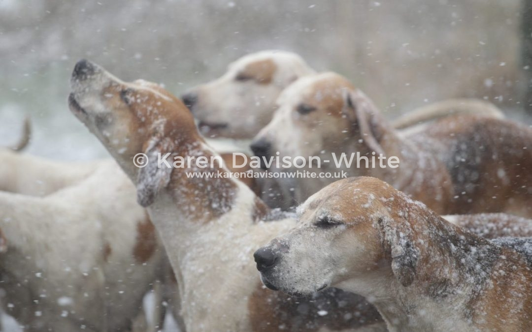 South Wold Foxhounds 17.3.18 –  Let it snow – Let it snow – Let it snow!