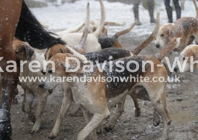 IMG_3230South Wold Foxhounds