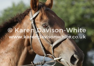 IMG_3548karendavisonwhite thoroughbred