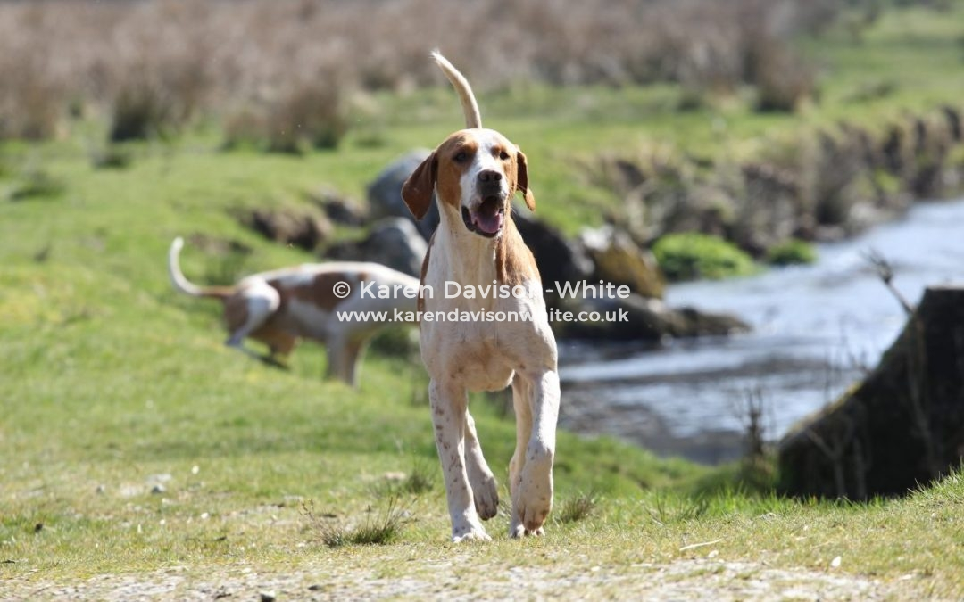 Exmoor Foxhounds 29.3.19 Last meet of the season.
