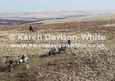 IMG_3777Exmoor foxhounds on the moor karendavisonwhite