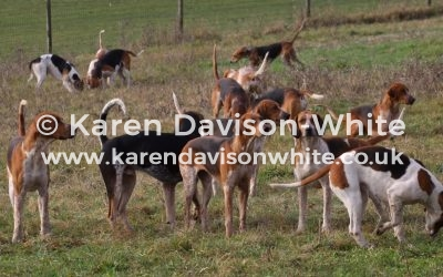 Essex and Suffolk Foxhounds 19.1.19