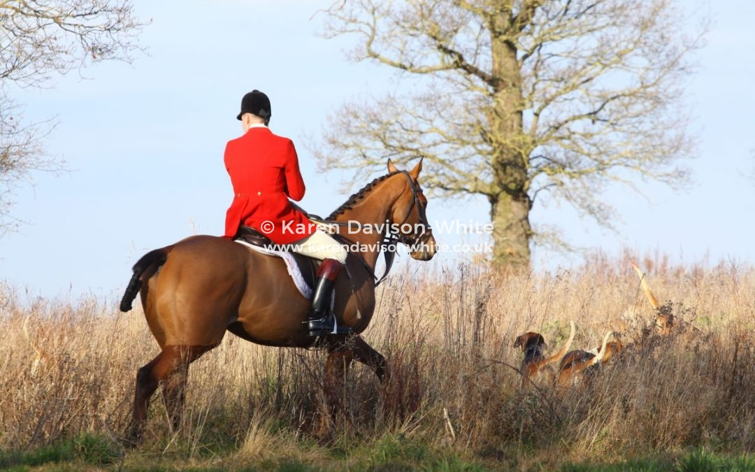 Essex and Suffolk Foxhounds 19.1.19 take two