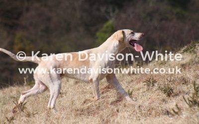 Exmoor Foxhounds 27.3.19