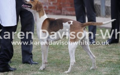 Thurlow Puppy Show 9.6.18 take two