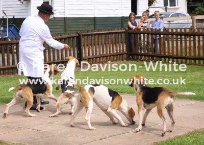 IMG_5217 Ross Dog hounds