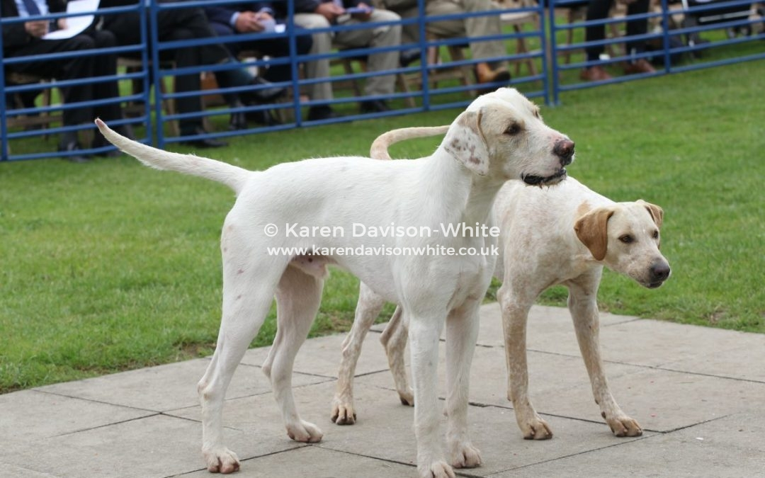 Thurlow Foxhounds 25th June, 2019