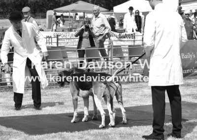 IMG_6724 (2)Percy Foxhounds kdwimage