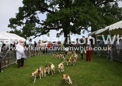 IMG_7469Stour Valley Beagles