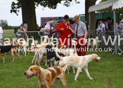 IMG_7482Suffolk Foxhounds
