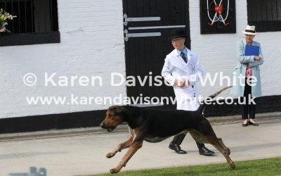 Essex & Suffolk Foxhounds Puppy Show 7th July 2019