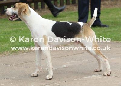 IMG_7732 Ross Bandit best dog hound