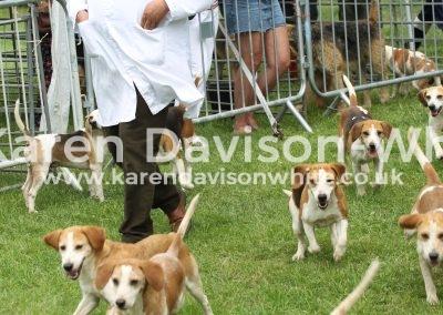 IMG_8142Stour Valley Beagles