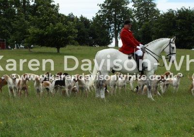 IMG_8174Suffolk Foxhounds karendavisonwhite