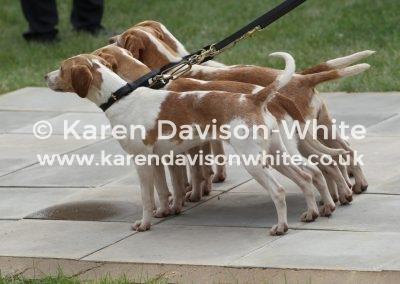 IMG_8329Dummer Beagles