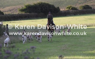 Exmoor Foxhounds