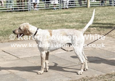 IMG_9029 North Cotswold Battleaxe by G&R Broker 15 chdghound.
