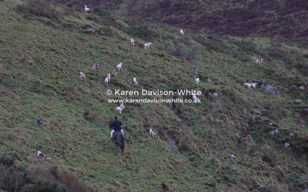 Exmoor Foxhounds part two