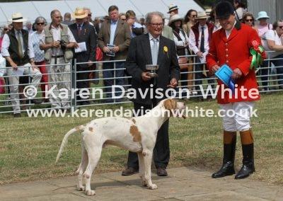 IMG_9131Dulverton West Griffin by NC Greenwich 13won stallion class