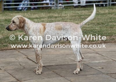 IMG_9182Cotswold Battleaxe chdgh by G&R Broker 15-Barmaid 16